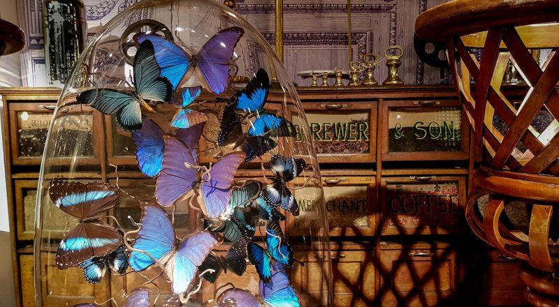 butterflies-on-Rue-Paul-Bert